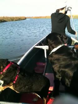 Recent Canoe Trip